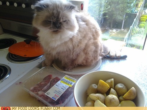 cat cooking counter meat potatoes - 5807365376