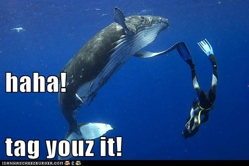 animals,diver,tag,whale,youre-it