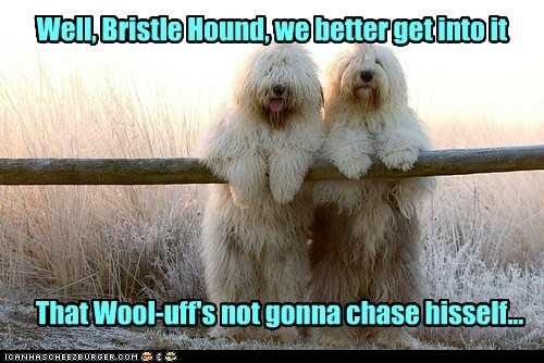 Well, Bristle Hound, we better get into it That Wool-uff's not gonna chase hisself...