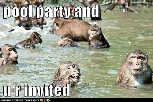 animals,monkey,monkeys,pool party,swim,swimming,youre-invited