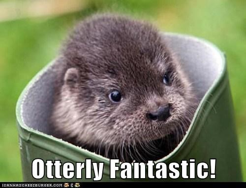 animals,boot,cute,fantastic,otter