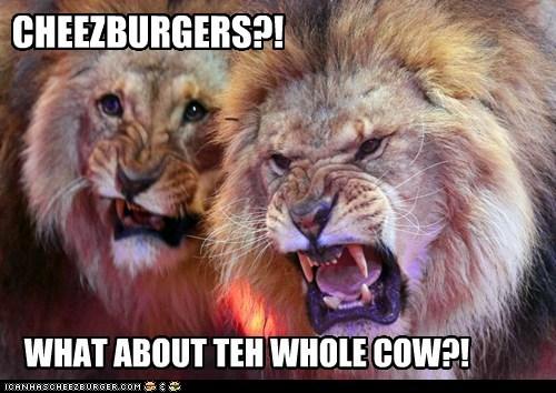 Cheezburger Image 5807987968