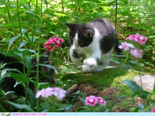flowers,kitten,lucy,moss,outside