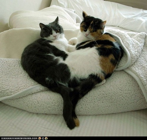 cuddling,cyoot kitteh of teh day,heart,hearts,two cats,valentines,Valentines day