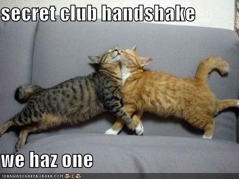 handshakes lolcats - 580840704