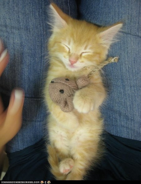 cyoot kitteh of teh day,lap,laps,orange,sleeping,toys