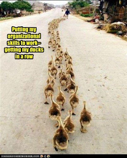 bird birds dows in a row ducklings ducks - 5808685056