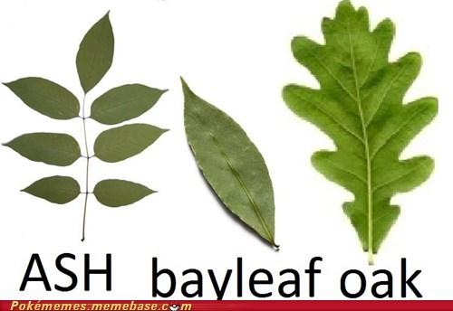 ash shows his bayleaf to oak