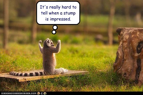 caption captioned confused hard impressed lemur showing off stump tell unclear