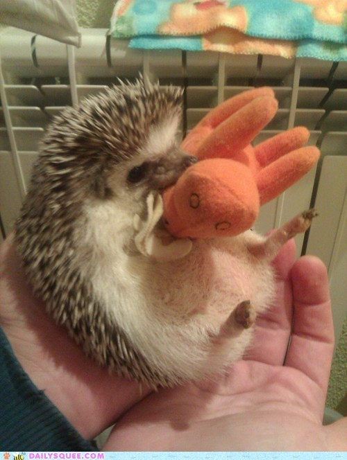 crazy,hedgehog,playing,reader squees,stuffed animal,wild