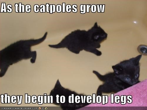 black frogs kitten lolcats lolkittehs - 581025024