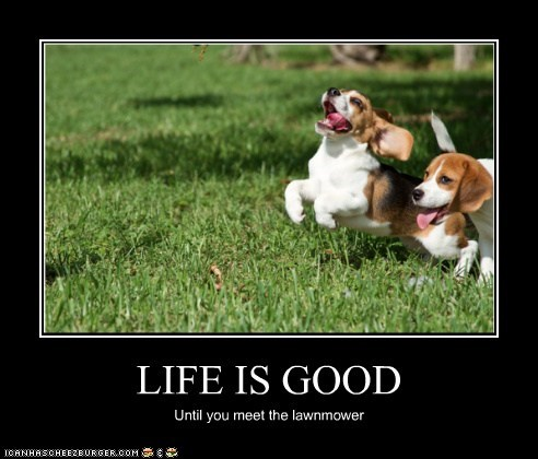 LIFE IS GOOD Until you meet the lawnmower