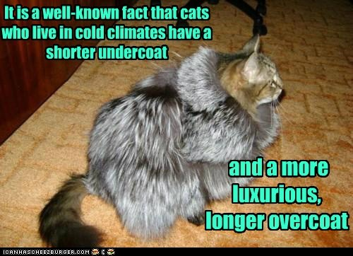 caption captioned cat Cats climate cold fact longer luxurious overcoat pun shorter undercoat well-known - 5811280896
