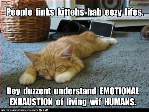 best of the week caption captioned cat cohabitation easy emotional exhausted exhaustion humans incorrect kitten living tabby tired with
