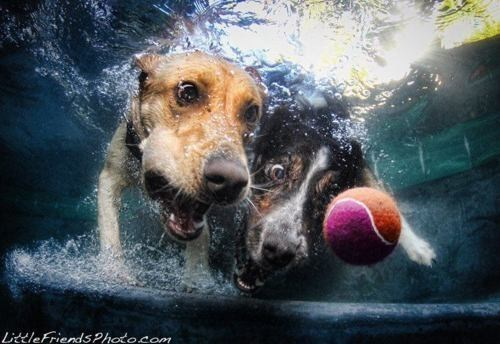 BALLBALLBALL doggeh Photo Series - 5811992576