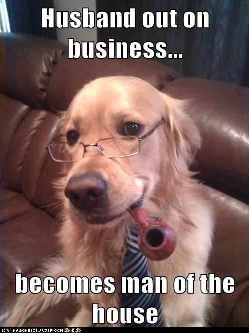 glasses,golden retriever,man of the house,pipe,tie