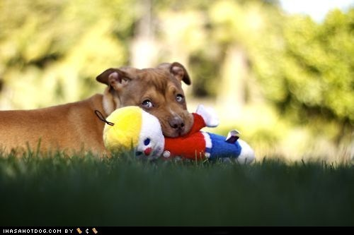adorable cyoot puppeh ob teh day grass mixed breed outside puppy toy whatbreed - 5813338880