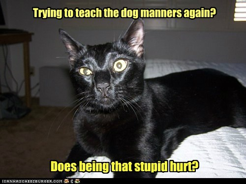 Does being that stupid hurt? Trying to teach the dog manners again?
