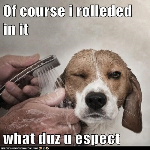 Of course i rolleded in it what duz u espect