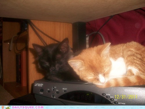 box cat Cats Heat kitten reader squees sleeping stereo television warmth - 5814471936
