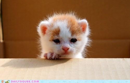 baby cat Hall of Fame kitten newborn tabby tiny - 5814571008