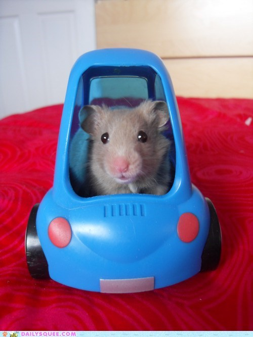 acting like animals car driving hamster pretending stuck tiny toy traffic - 5814591488