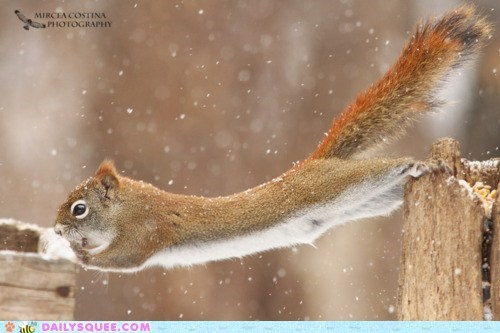 acting like animals do want heist noms nuts squirrel stretching suspicious worried - 5814606080