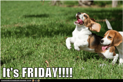 beagle beagles excited FRIDAY happy running - 5814882560