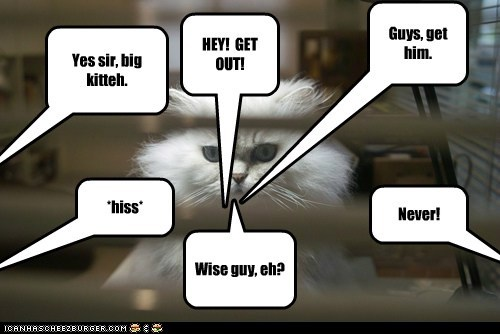 Guys, get him. Yes sir, big kitteh. *hiss* HEY! GET OUT! Never! Wise guy, eh?