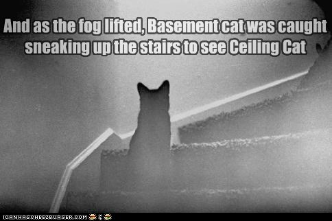 And as the fog lifted, Basement cat was caught sneaking up the stairs to see Ceiling Cat