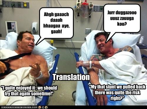 actor Arnold Schwarzenegger celeb funny Sylvester Stallone - 5815415552