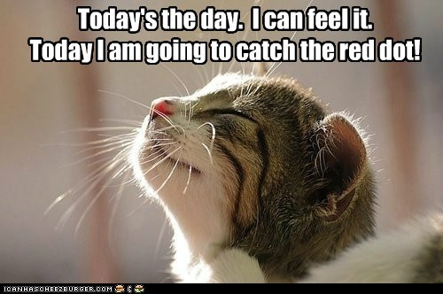 caption captioned cat catch kitten laser optimistic red dot today - 5815583488