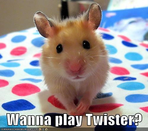 adorable animals cute game mouse twister - 5816151296