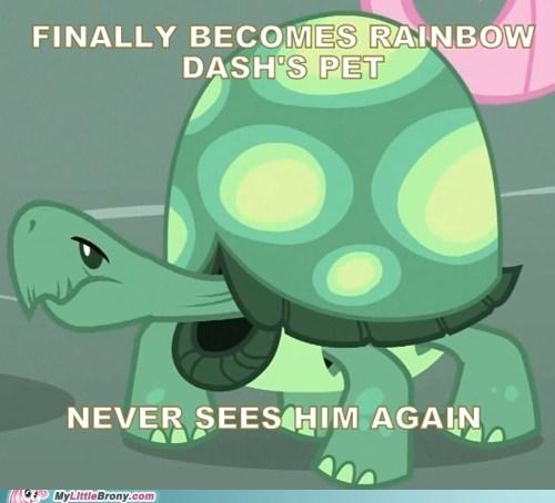dash,hope,pet,ponies,turtle