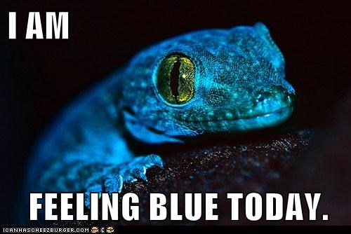 animals awesome blue feeling blue lizard vivid colors - 5816321536