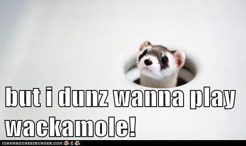 animals best of the week ferret Hall of Fame ouch weasel whack a mole - 5816404736