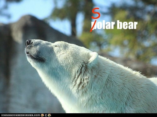 adorable animals awesome bear polar bear solar bear - 5816598784