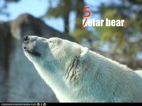 adorable animals awesome bear polar bear solar bear - 5816598784