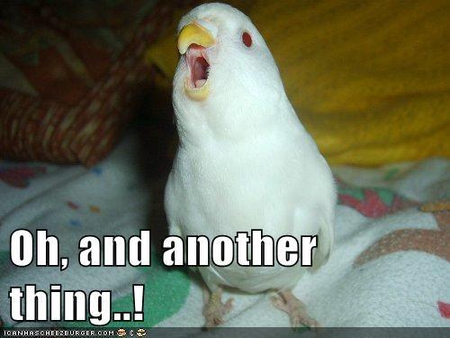 bird nag nagging parrot - 5816636672