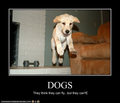 DOGS They think they can fly...but they can't!
