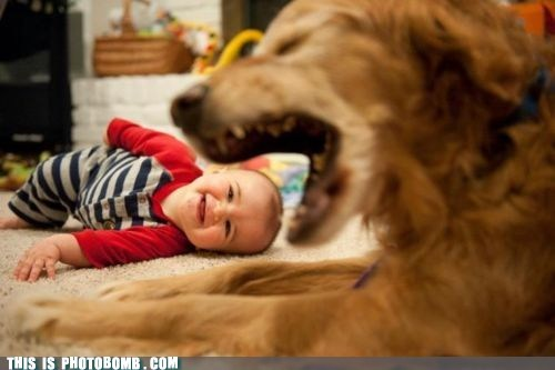 animal,Animal Bomb,baby,dogs,food,kid,yum