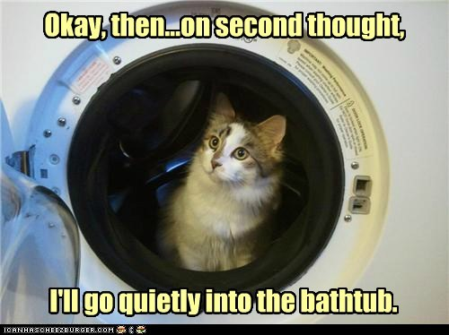 bath bathtub caption captioned cat change of heart reconsidering second thought washer