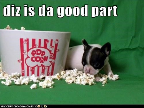 boston terrier,Movie,movie theater,Popcorn