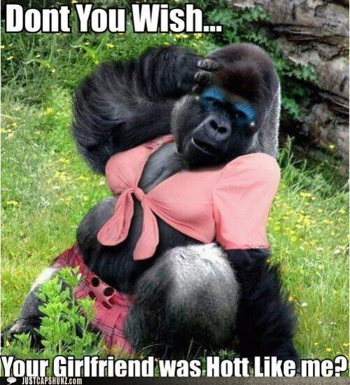 animals girlfriend hot sexy - 5817347072
