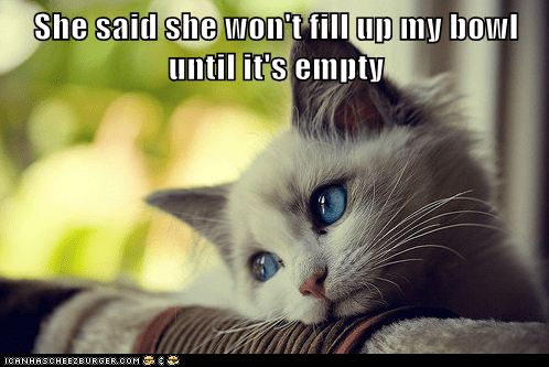 first world cat problems - 5817536256