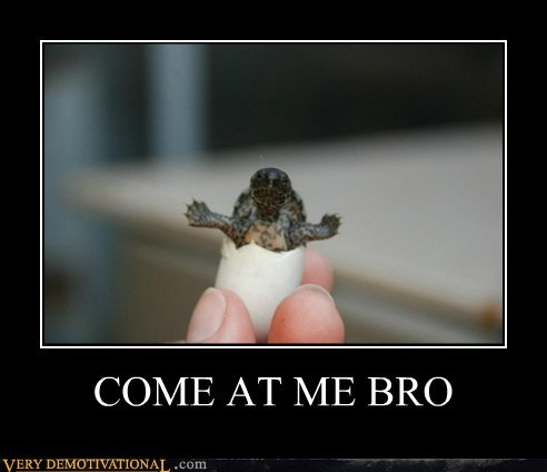 animal,baby,cute,Pure Awesome,turtle