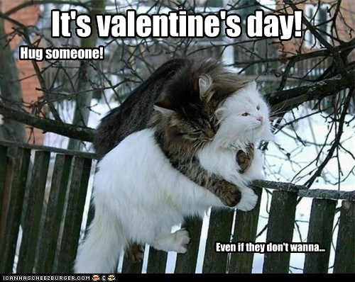 caption captioned cat Cats hug resistance someone suggestion Valentines day - 5817991168