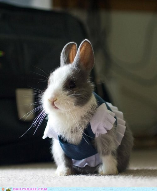 acting like animals bunny classy dressed up happy bunday rabbit - 5818055680