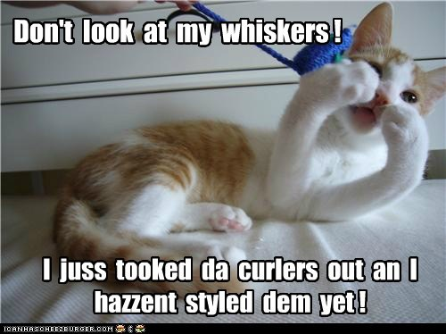 caption,captioned,cat,curlers,dont,embarrassed,have not,kitten,look,styled,tabby,whiskers,yet