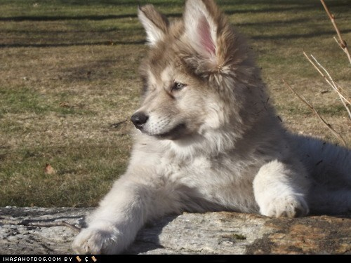 adorable cute puppy cyoot puppeh look out outdoors puppy whatbreed - 5818115328